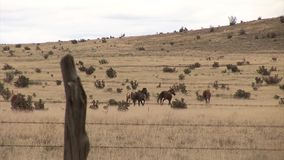 Vast prairie with horses behind the fence stock footage
