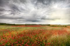 Vast wild red poppy fields landscape Stock Image