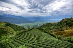 Vasta estensione di agricoltura, dei raccolti e della piantagione sulla collina fotografia stock libera da diritti