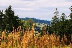 Vasta vista dalla collina boscosa in Owl Mountains Landscape Park, Sudetes, Polonia di panorama Fotografie Stock