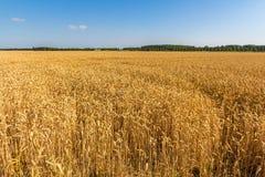 Vaste champ de grain européen Photo libre de droits