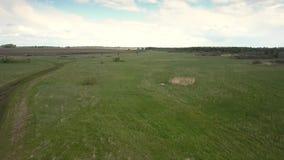 Vaste pré aérien avec des bouts droits d'herbe verte à l'horizon banque de vidéos