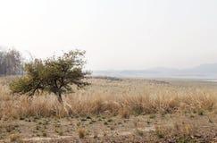 Vaste prairie le long de réservoir de Pench, Pench Tiger Reserve Photos stock