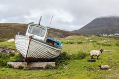 Vastgelopen boot op een Schots groen gebied met schapen aan de kant Stock Foto