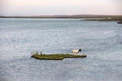 Vastgelopen paard op een klein eiland royalty-vrije stock foto's