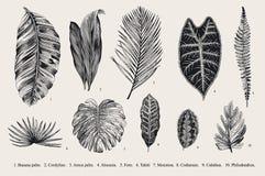 Vastgesteld Blad exotics Uitstekende vector botanische illustratie vector illustratie