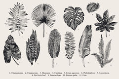 Vastgesteld Blad exotics Uitstekende vector botanische illustratie Royalty-vrije Stock Afbeelding