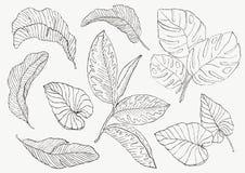 Vastgesteld Blad exotics Uitstekende vector botanische illustratie Stock Afbeeldingen