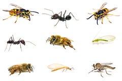 Vastgesteld die insect op wit wordt geïsoleerd Stock Foto