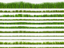 Vastgesteld gras Stock Afbeelding