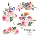 Vastgesteld uitstekend bloemen vectorboeket van Engelse rozen Royalty-vrije Stock Afbeelding