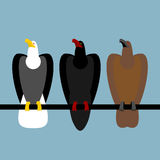 Vastgestelde adelaarsroofvogels Snelle Kale adelaar met wit hoofd stock illustratie