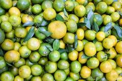 Vastgestelde citroen groene en gele kleuren Royalty-vrije Stock Fotografie
