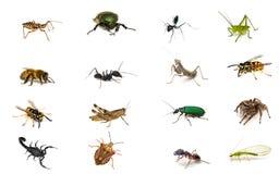 Vastgestelde insecten Royalty-vrije Stock Foto