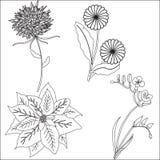 Vastgestelde krabbel getrokken die bloemen op witte achtergrond voor ontwerp worden geïsoleerd Stock Foto's