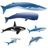 Vastgestelde mariene zoogdieren stock illustratie