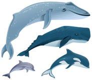 Vastgestelde mariene zoogdieren Blauwe vinvis, potvis, dolfijn, orka royalty-vrije illustratie