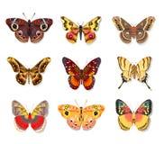 Vastgestelde mooie vlinder op witte achtergrond Stock Foto's