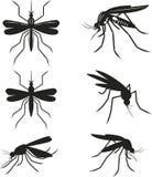 Vastgestelde muggen Stock Foto's