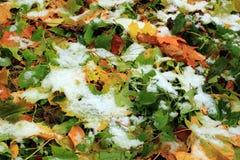 Vastgestelde Sneeuw op Gras, bladeren en boom Stock Foto