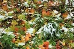 Vastgestelde Sneeuw op Gras, bladeren en boom Stock Foto's