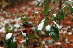 Vastgestelde Sneeuw op Gras, bladeren en boom Stock Fotografie