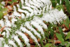 Vastgestelde Sneeuw op Gras, bladeren en boom Stock Afbeelding