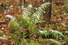 Vastgestelde Sneeuw op Gras, bladeren en boom Royalty-vrije Stock Foto
