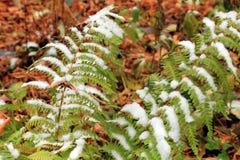 Vastgestelde Sneeuw op Gras, bladeren en boom Royalty-vrije Stock Afbeelding