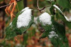 Vastgestelde Sneeuw op Gras, bladeren en boom Royalty-vrije Stock Foto's