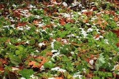 Vastgestelde Sneeuw op Gras, bladeren en boom Royalty-vrije Stock Fotografie