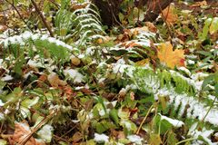 Vastgestelde Sneeuw op Gras, bladeren en boom Royalty-vrije Stock Afbeeldingen