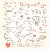 Vastgestelde tekeningen van gevogelte en ei voor ontwerpmenu's, recepten Vlees van pluimveekip, Turkije, gans, eend, kwartels, fa royalty-vrije illustratie