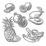 Vastgestelde tropische vruchten Ananas, kalk, banaan, granaatappel, maracuya, avocado royalty-vrije illustratie