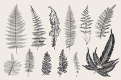 Vastgestelde Varens 12 bladeren Uitstekende botanische illustratie Royalty-vrije Stock Foto's