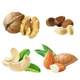 Vastgestelde vectorpictogrammen van noten stock illustratie