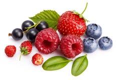 Vastgestelde verse bes Framboos van het mengelings de zomerse fruit royalty-vrije stock foto's