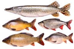 Vastgestelde verse ruwe geïsoleerde vissen, het knippen weg Royalty-vrije Stock Afbeeldingen