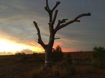 Vastgestelde wolken van de Coober de pedy zon Stock Afbeeldingen