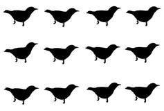 Vastgestelde zwarte die vogel op witte achtergrond wordt geïsoleerd royalty-vrije stock afbeeldingen