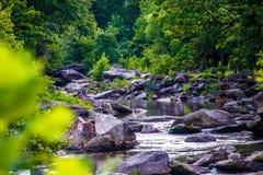 Vasto fiume che attraversa foresta boscosa immagine stock