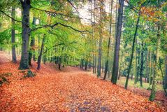 Vasto sentiero per pedoni coperto di foglie in autunno immagini stock