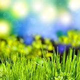 Vat de zomerachtergrond met gras samen royalty-vrije stock afbeelding