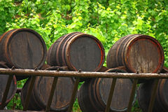 Vat wine and leaves Royalty Free Stock Photo