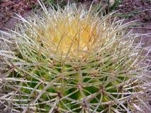Vatcactus Thorn Closeup royalty-vrije stock foto's