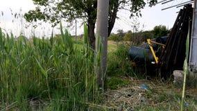 Vaten industrieel afval dichtbij de groene boom en het riet Het concept verontreiniging van aard en opslag van giftige producten stock videobeelden