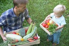 Vater hält einen großen Kasten Gemüse, und sein Kleinkindsohn hält lizenzfreies stockbild