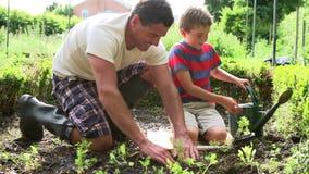 Vater-And Son Planting-Sämling im Boden auf Zuteilung stock video footage