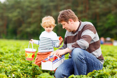 Vater- und Kleinkindjunge auf Erdbeere bewirtschaften im Sommer Stockbild