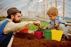Vater und Sohn im Gewächshaus Vater und Sohn im Gewächshaus zusammen pflanzend Vater und Sohn, die herein zusammenarbeiten lizenzfreies stockbild